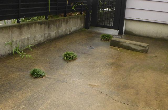 ぶち抜き、すり抜ける植物たち <大船~富士見町編>