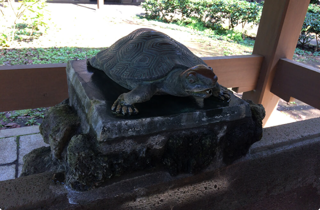 江の島の亀