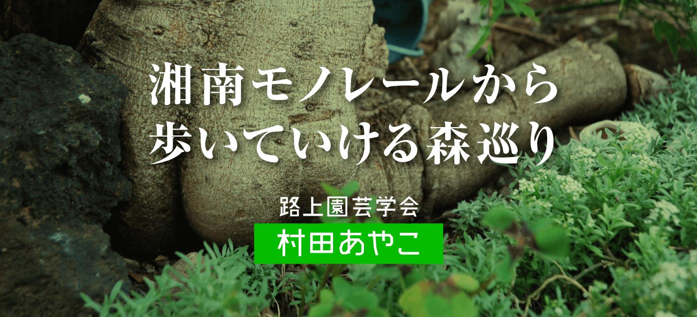 湘南モノレールから歩いていける森巡り 村田あやこ(続編)