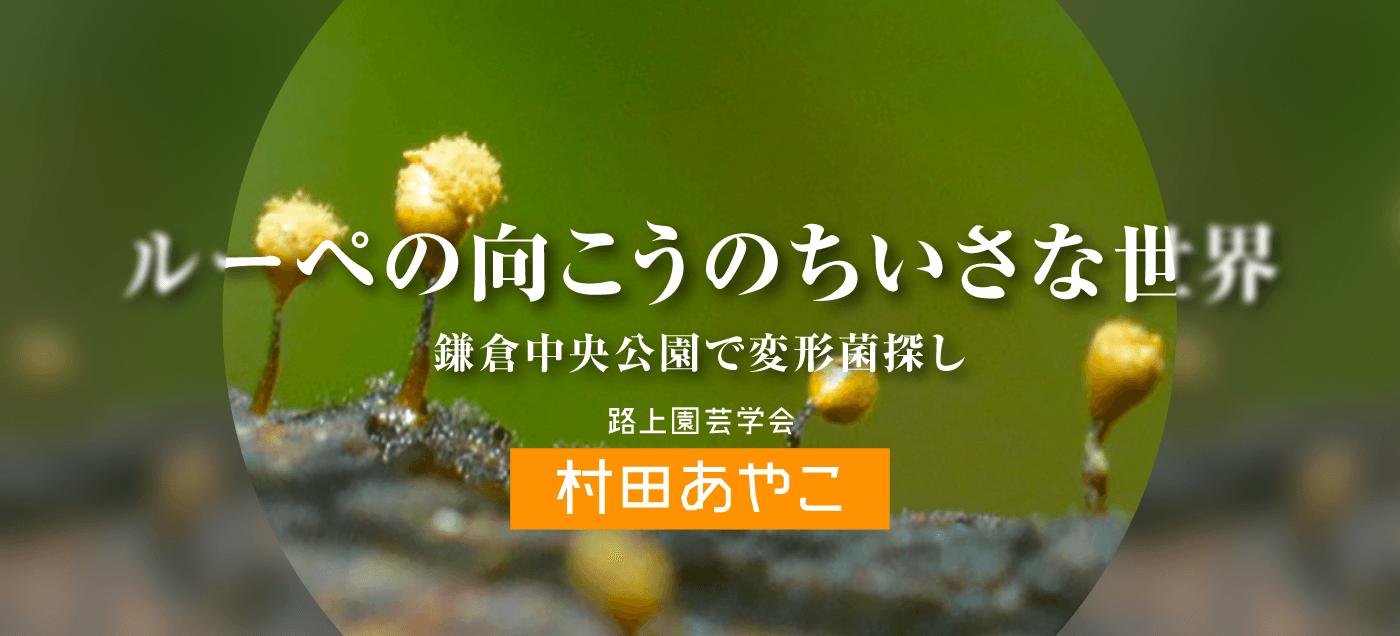 ルーペの向こうのちいさな世界 村田あやこ(変形菌編)