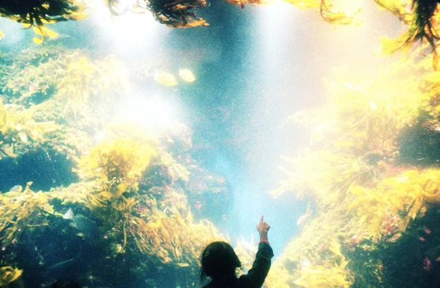 水の中のカラフルな世界