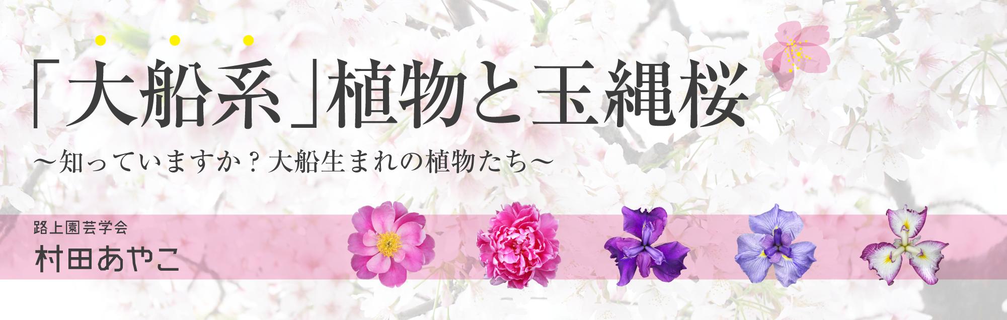 「大船系」植物と玉縄桜~知っていますか?大船生まれの植物たち~ 村田あやこ(大船系植物編)